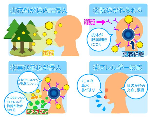 【花粉症対策】日本であまり知られてない成分とオススメしない荒業-01