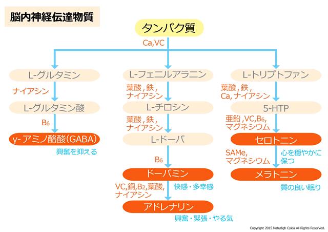 【必読】プロテイン(タンパク質)が内面(メンタル)にも良い科学的根拠-01